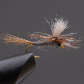 Adams-Parachute-12,-_WEB