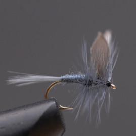 Blue-dun-9,-_web