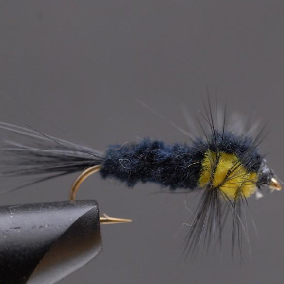 Montana-Gul-12,-_web