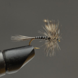 Mosquito-12,-_web